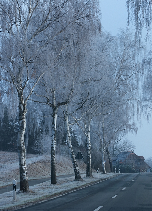 birken_allee_birch-trees_alley_frozen2_700-jpg.611116