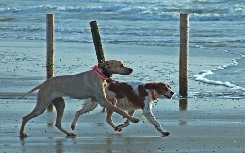 off-leash_best-buddies-jpg.614523