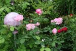 Rose Charles Renee Mackintosh0216.jpg