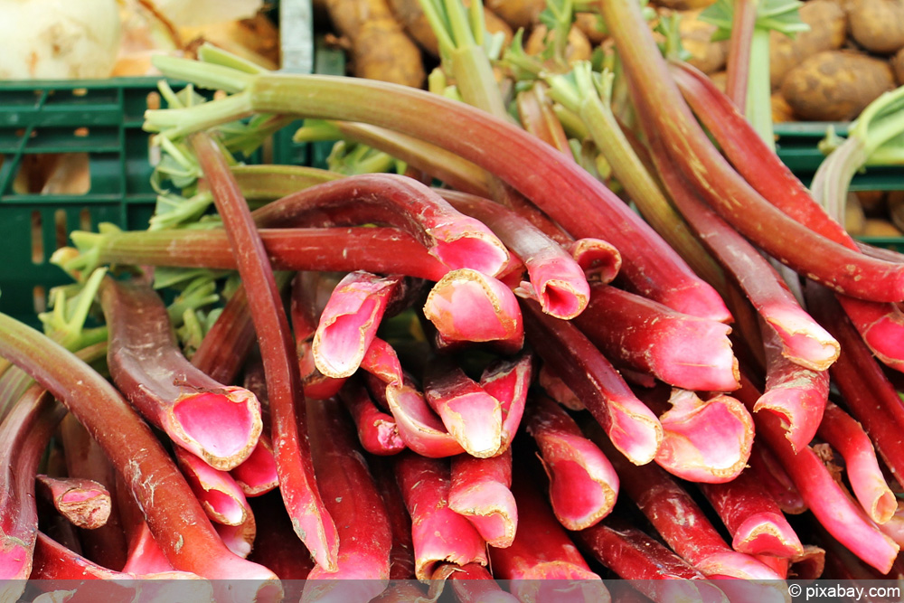 rhabarber sch len so putzen sie das gem se richtig. Black Bedroom Furniture Sets. Home Design Ideas